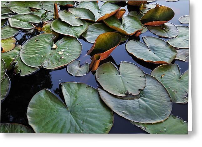 Lake Plant Greeting Card by Svetlana Sewell
