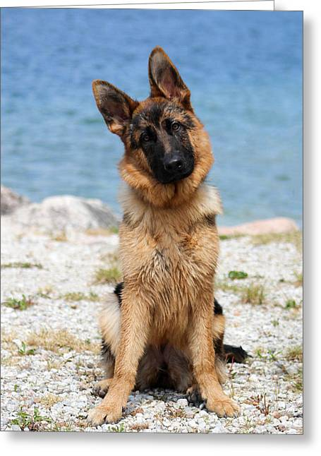 Puppies Photographs Greeting Cards - Lake Puppy Greeting Card by Dylan Muckey
