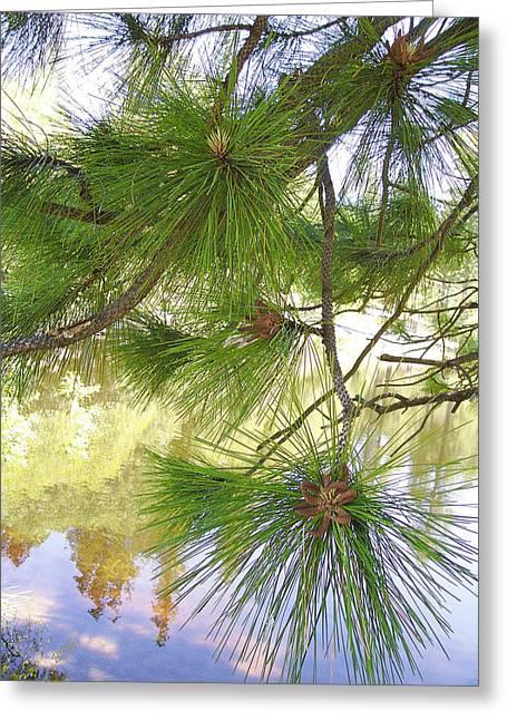 Fir Trees Greeting Cards - Lake View With Ponderosa Pine Greeting Card by Ben and Raisa Gertsberg