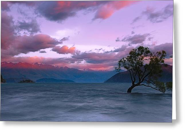 Willow Lake Greeting Cards - Lake Wanaka Sunrise Greeting Card by Andre Distel