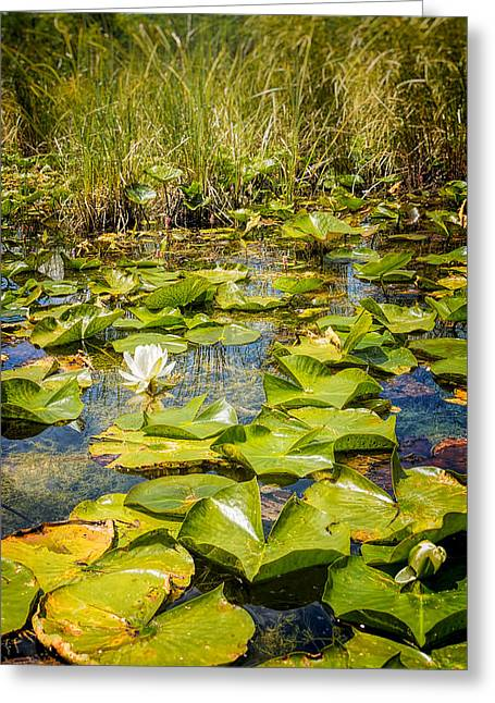 Independance Day Greeting Cards - Lake Water Lily  Greeting Card by LeeAnn McLaneGoetz McLaneGoetzStudioLLCcom