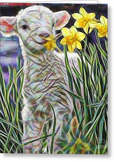 Lamb Greeting Cards - Lamb Collection Greeting Card by Marvin Blaine