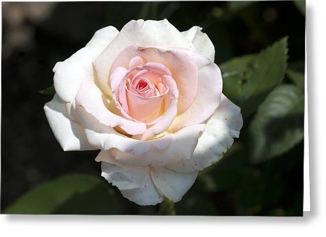 Pitcher Of Roses Greeting Cards - Lan Nina Greeting Card by Don  Wright