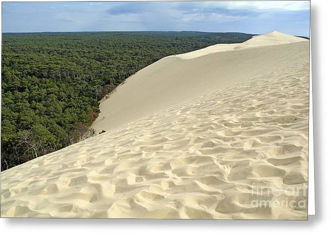 Great Dunes Greeting Cards - Landes Forest seen from the Great Dune of Pyla Greeting Card by Sami Sarkis