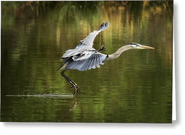 Great Birds Greeting Cards - Landing Gear Down  Greeting Card by Saija  Lehtonen