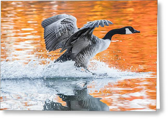 Reflection In Water Greeting Cards - Landing Greeting Card by Parker Cunningham