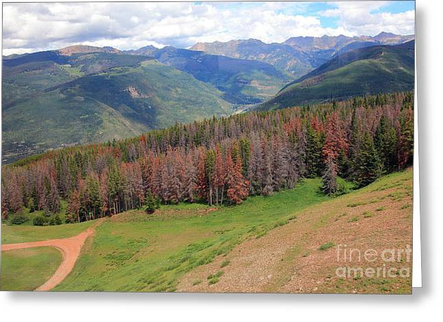 Russet Greeting Cards - Landscape in Vail Greeting Card by Madeline Ellis
