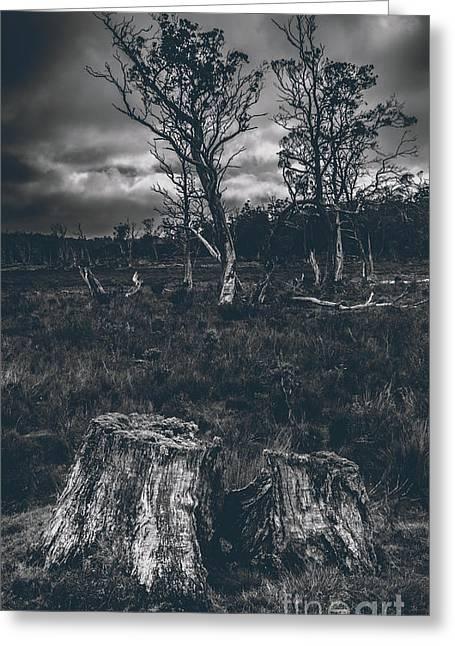 Landscape Of A Dark Creepy Australian Woodland  Greeting Card by Jorgo Photography - Wall Art Gallery