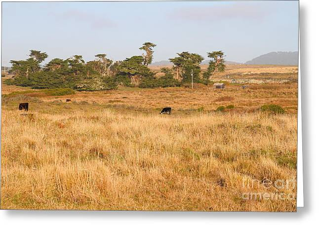 Landscape With Cows Grazing In The Field . 7d9957 Greeting Card by Wingsdomain Art and Photography