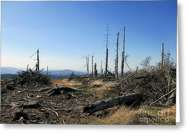 Landscape With Dead Old Trees In Poland, Beskid Slaski Near The Skrzyczne Peak Greeting Card by Unknow