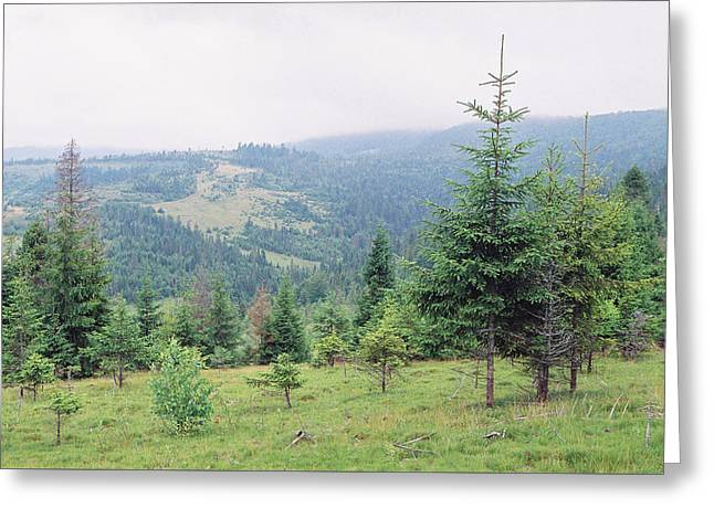 Landscape With Firs Greeting Card by Anton Popov