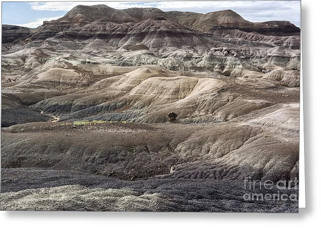 Petrified Forest Arizona Greeting Cards - Landscape With Many Colors Greeting Card by Melany Sarafis