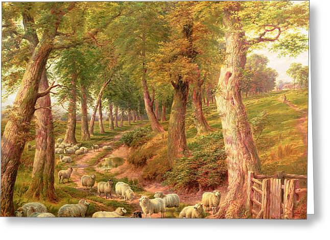 Landscape with Sheep Greeting Card by Charles Joseph