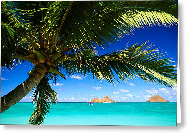 Sailboat Art Greeting Cards - Lanikai, Palm Tree Greeting Card by Dana Edmunds - Printscapes