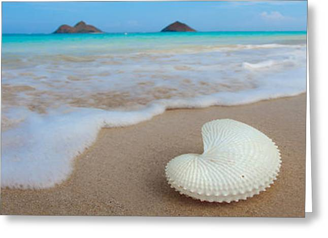 Sealife Greeting Cards - Lanikai Paper Nautilus Greeting Card by Sean Davey