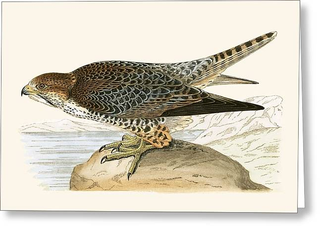 Lanner Falcon Greeting Card by English School