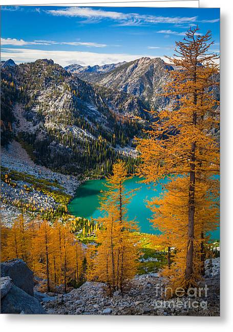 Larches At Colchuck Greeting Card by Inge Johnsson