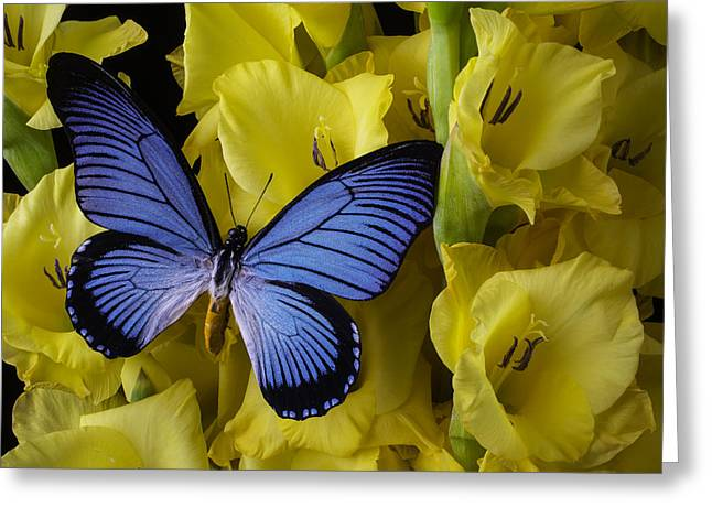 Gladiolus Greeting Cards - Large Blue Winged Butterfly Greeting Card by Garry Gay