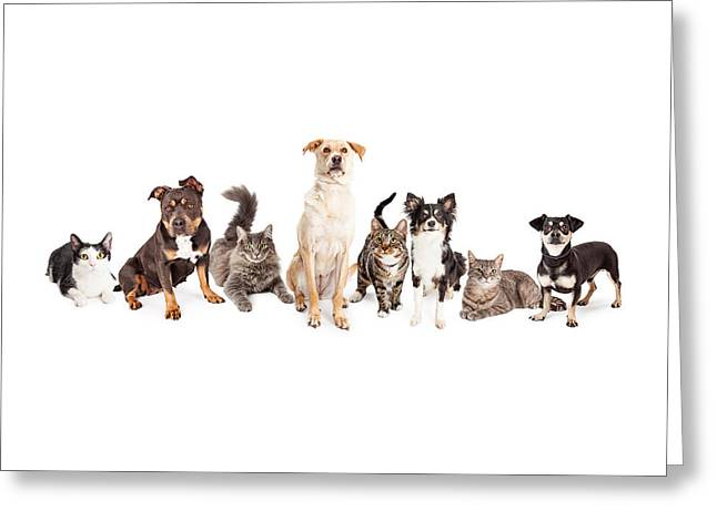 Dog Photographs Greeting Cards - Large Group of Cats and Dogs Together Greeting Card by Susan  Schmitz