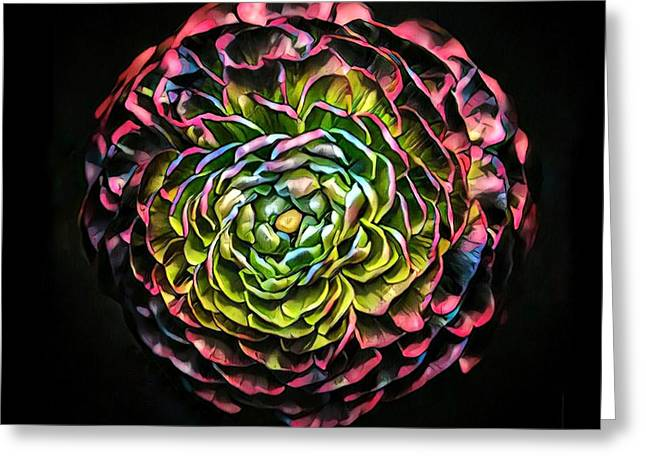 Large Pink Flower Against Black Background Greeting Card by Amy Cicconi