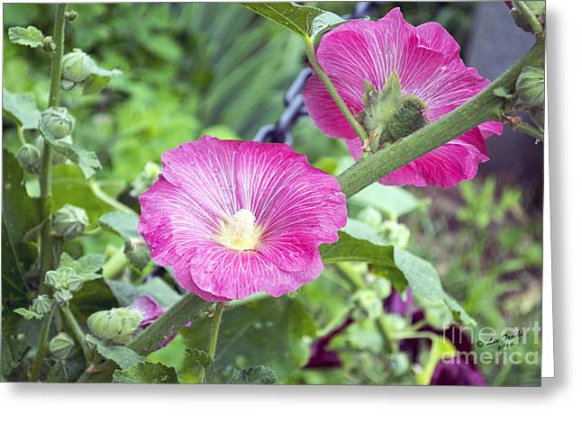 Les Fleurs Greeting Cards - Large PInk Saucers Greeting Card by Linda Troski