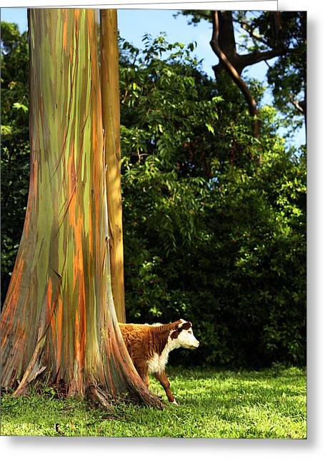 Eucalyptus Greeting Cards - Large Things Greeting Card by Marilyn Hunt