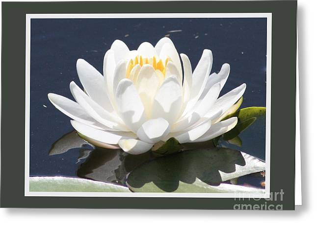 Water Garden Digital Art Greeting Cards - Large Water Lily with Border Greeting Card by Carol Groenen