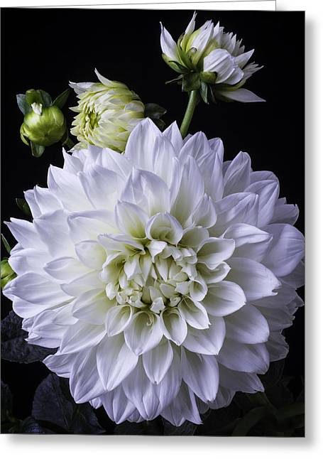 White Photographs Greeting Cards - Large White Dahlia Greeting Card by Garry Gay