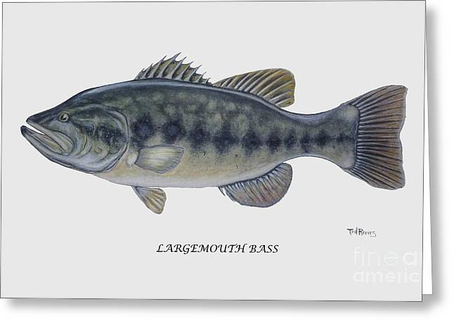 Largemouth Greeting Cards - Largemouth Bass Greeting Card by Ted Reeves