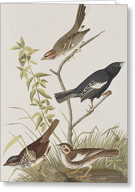 Finch Greeting Cards - Lark Finch Prairie Finch Brown Song Sparrow Greeting Card by John James Audubon