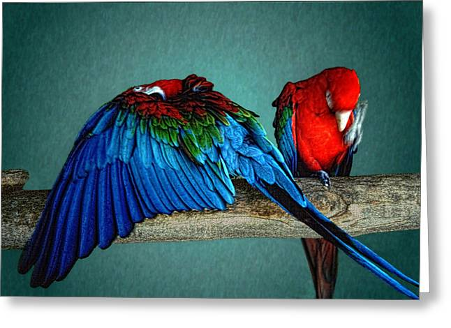 Gaphic Greeting Cards - Las aves Pequenas Greeting Card by Paul Wear