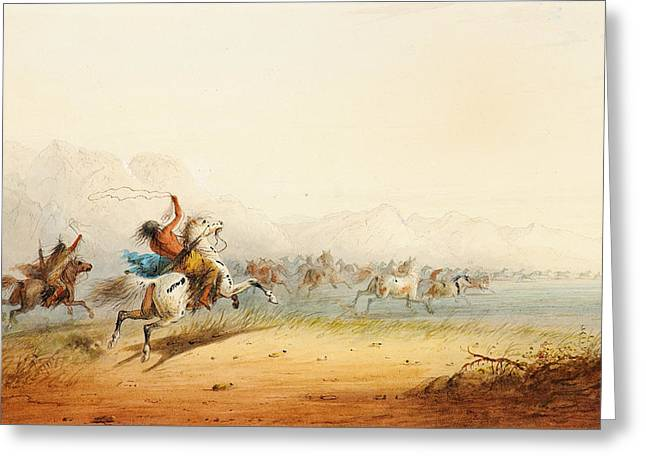 Chinook Paintings Greeting Cards - Lassoing Horses Greeting Card by Alfred Jacob Miller