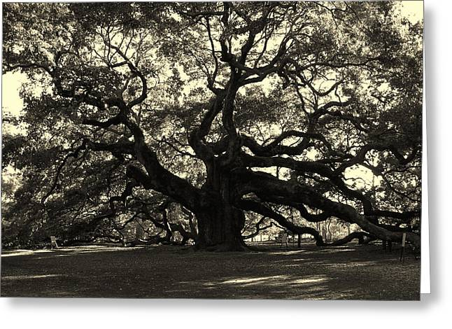 Fine Art White Nature Trees Greeting Cards - Last Angel Oak 72 Greeting Card by Susanne Van Hulst