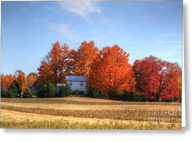 Signora Greeting Cards - Last color on the farm Greeting Card by Robert Pearson
