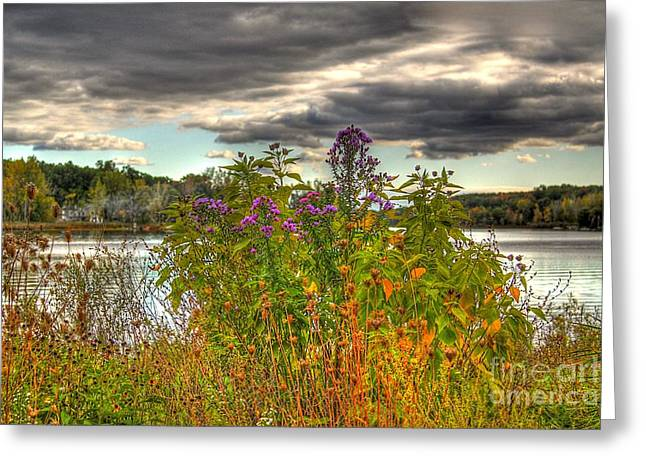 Autumn Art Greeting Cards - Last Flower of Fall Greeting Card by Robert Pearson