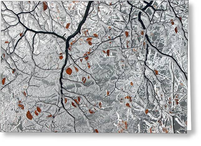 Frost Photographs Greeting Cards - Last Leaves Greeting Card by Martin Rak