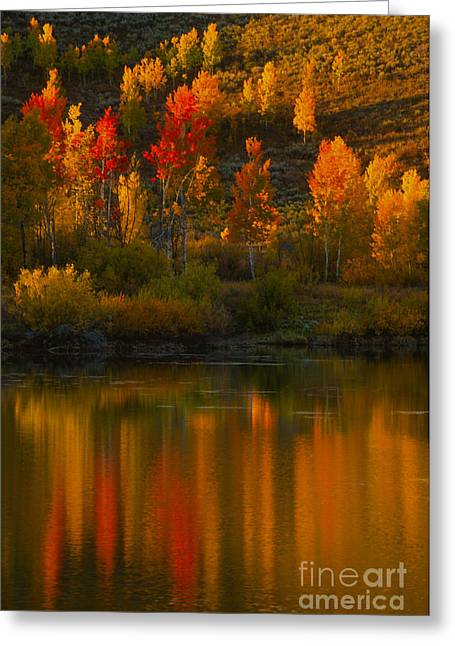 Last Light At Oxbow Bend  Greeting Card by Sandra Bronstein