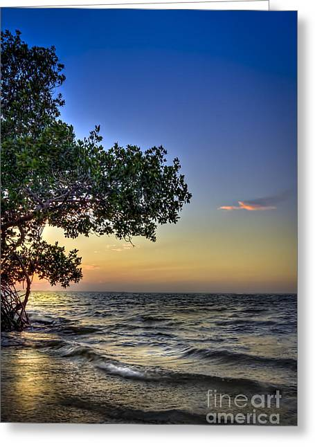 Gulf Of Mexico Scenes Greeting Cards - Last Light Greeting Card by Marvin Spates