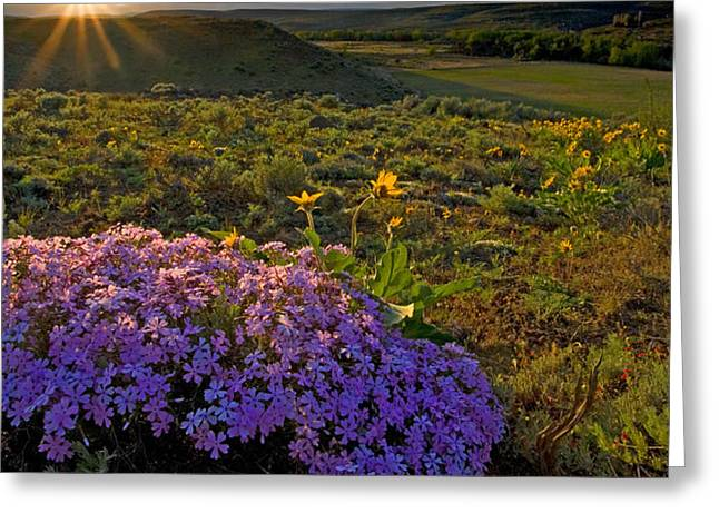 Last Light of Spring Greeting Card by Mike  Dawson