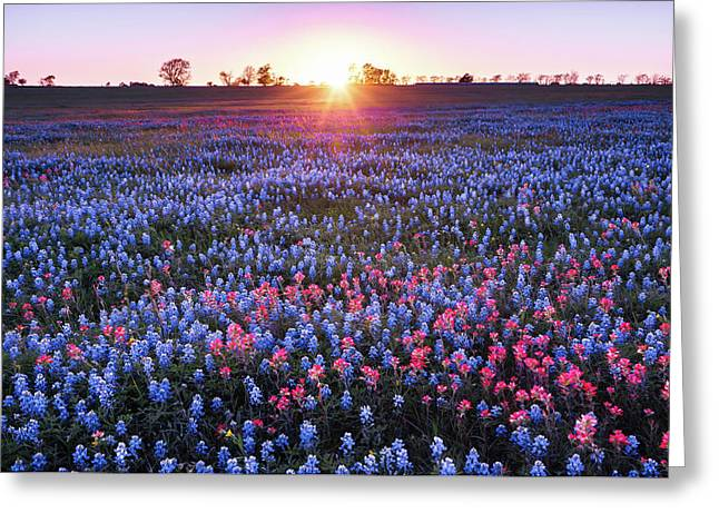 Last Sunlight Of The Day In Wildflower Field - Texas Greeting Card by Ellie Teramoto