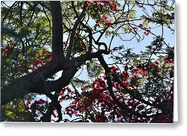 Light And Dark Greeting Cards - Late Afternoon Tree Silhouette I Greeting Card by Linda Brody