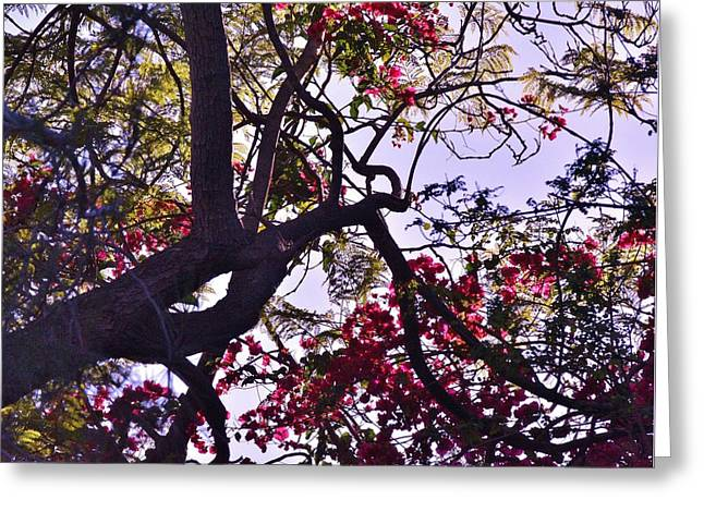 Light And Dark Greeting Cards - Late Afternoon Tree Silhouette III Greeting Card by Linda Brody
