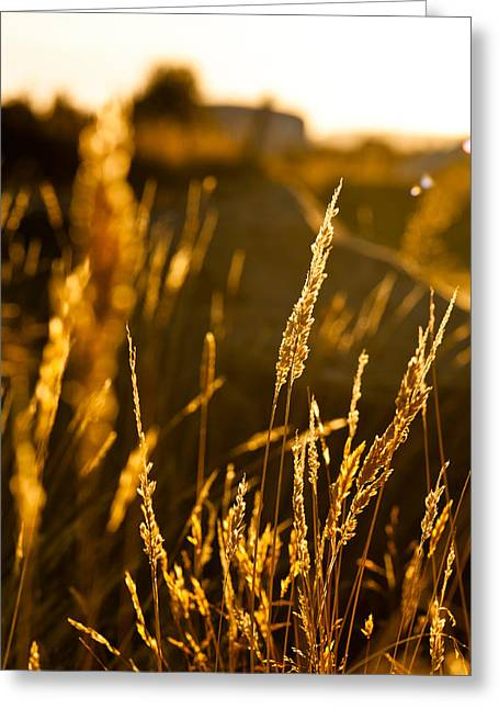 Fall Scenes Greeting Cards - Late afternoon Greeting Card by Ulrich Schade