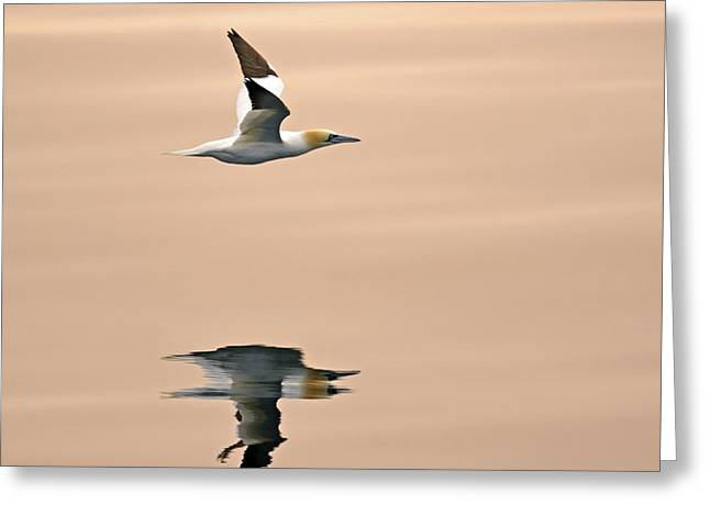 Late Arrival Greeting Card by Tony Beck