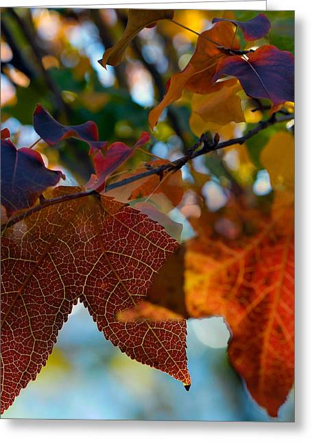 Fall Digital Art Greeting Cards - Late Autumn Colors Greeting Card by Stephen Anderson