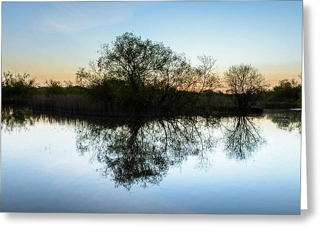 Trees Reflecting In Water Greeting Cards - Late Evening Reflections I Greeting Card by Marco Oliveira