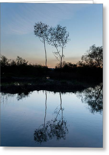 Trees Reflecting In Water Greeting Cards - Late Evening Reflections II Greeting Card by Marco Oliveira