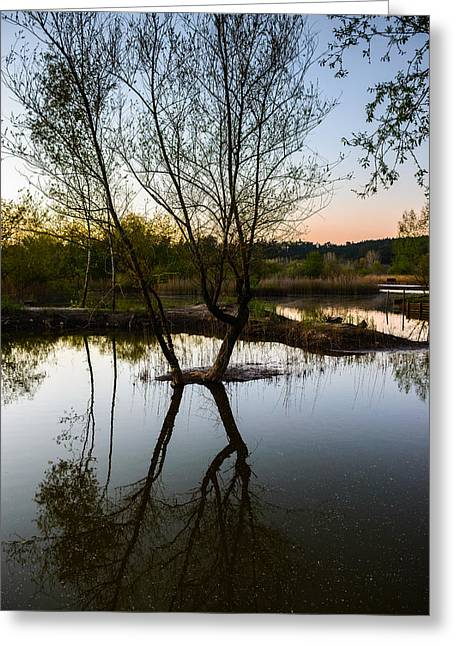 Trees Reflecting In Water Greeting Cards - Late Evening Reflections III Greeting Card by Marco Oliveira