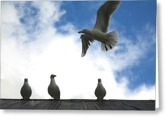 Flying Seagull Greeting Cards - Later Guys Im Out Greeting Card by Kreddible Trout
