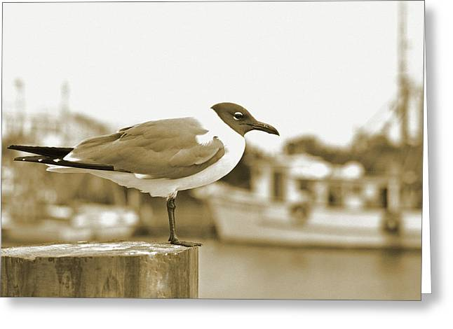 Laughing Gull Greeting Card by A R Williams